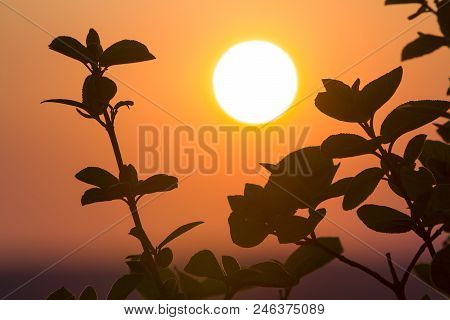 Beautiful Contrast Picture Of Clear Silhouettes Of Tree Branches With Dark Green Leaves Against Big