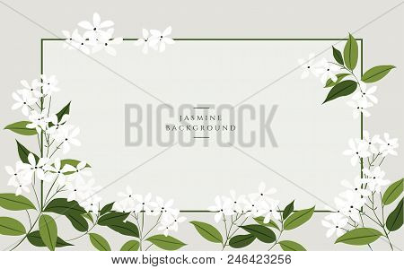 Vector Jasmine Flower Banners. Design For Tea, Natural Cosmetics, Beauty Store, Organic Health Care