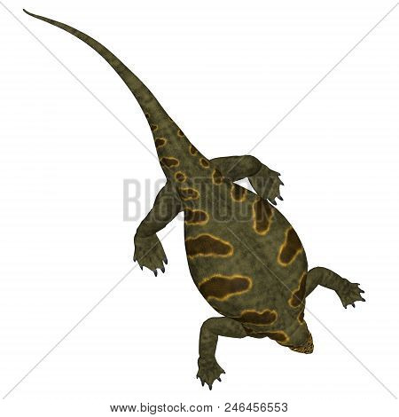 Cotylorhynchus Dinosaur On White 3d Illustration - Cotylorhynchus Was A Synapsid Herbivorous Reptile