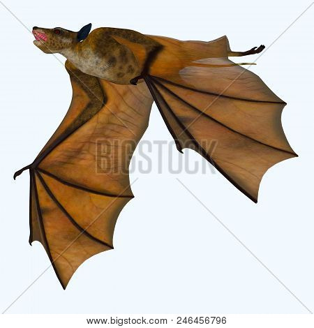 Icaronycteris Bat On White 3d Illustration - Icaronycteris Index Is The First Bat Known To Science A