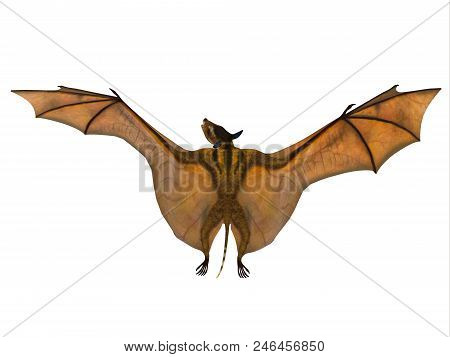 Icaronycteris Bat Wings 3d Illustration - Icaronycteris Index Is The First Bat Known To Science And