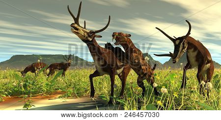 Kyptoceras Attacked By Saber-toothed Cat 3d Illustration - A Saber-toothed Cat Comes Out Of High Veg