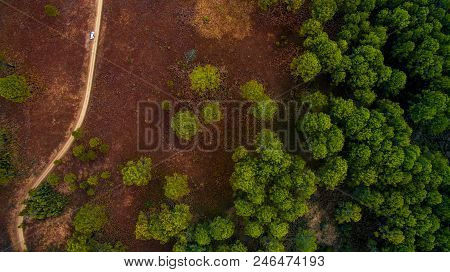 Bird Eye View Of Decidous Forest Field In Northern Of Thailand