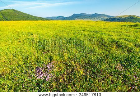 Grassy Meadow In Mountains. Lovely Scenery On Clear Morning