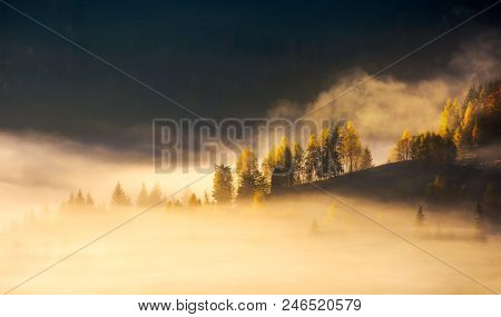 Row Of Trees On Hillside In Rising Fog. Gorgeous Scenery In Mountains At Sunrise. Inspiring Mood And