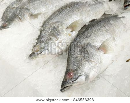 Fresh Fishes Giant Perch In The Supermarket.freeze Barramundi, White Snapper Or Sea Basses In The Ic