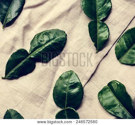 Aerial view of kaffir leaves