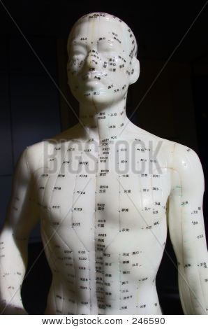 Acupuncture Model - Top Front