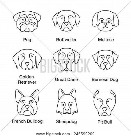 Dogs Breeds Linear Icons Set. Thin Line Contour Symbols. Pug, Rottweiler, Maltese, Golden Retriever,