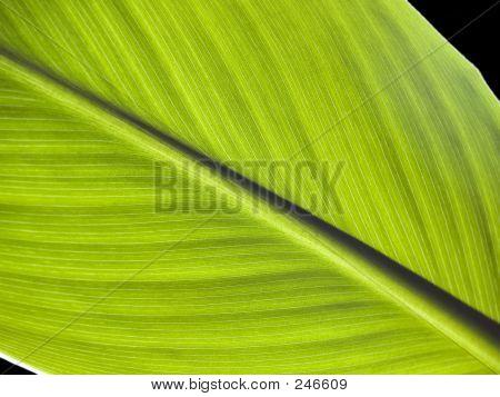 Leaf [2]