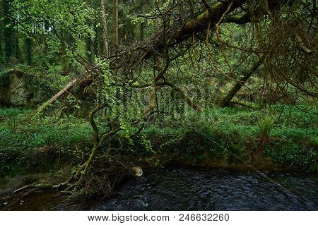 Green Woodland By The River In The Republic Of Ireland In Europe.