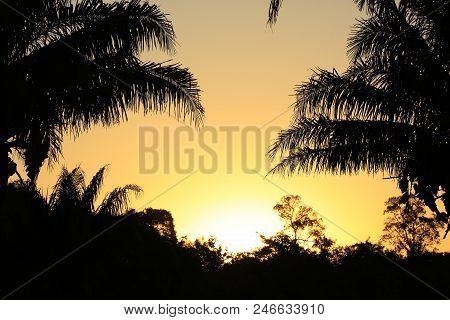 Sundown Behind Exotic Vegetation Silhouettes. Pantanal, Brazil