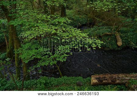 A River Passing Through In Green Forest.