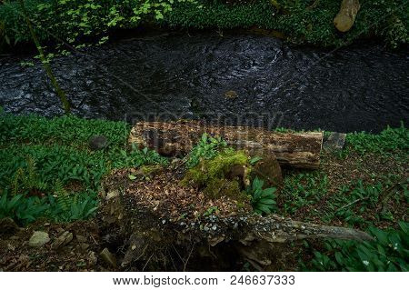Green Woodland With Cut Wood That Is Be-side The Flowing, Blue River.