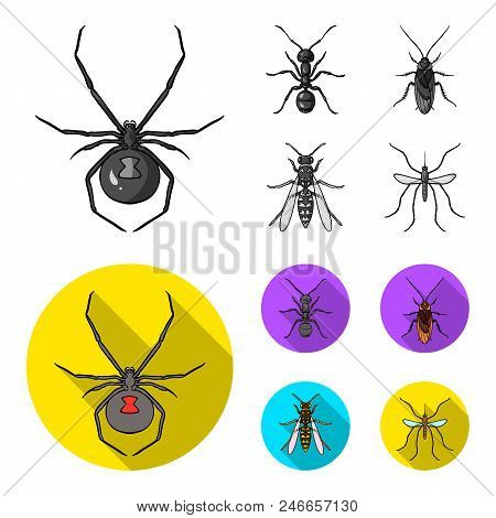 Spider, Ant, Wasp, Bee .insects Set Collection Icons In Monochrome, Flat Style Vector Symbol Stock I