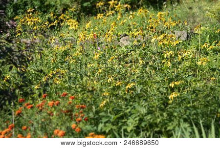 Forest Meadow With Yellow Flowers Wither. Summer