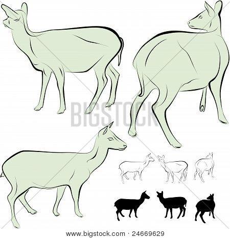 Reindeer. New character illustration.