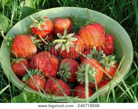 Garden Strawberry In A Green Cup, Omsk Region, Siberia, Russia