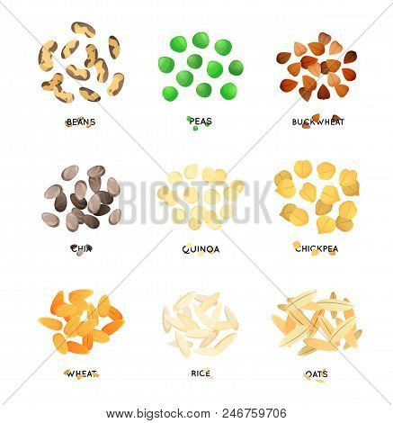 Agro Culture Seeds. Cereals Illustration. Wheat, Oat And Rice, Buckwheat And Pea, And Chickpea. Chia