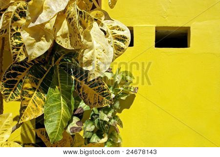Yellow leafs on yellow background