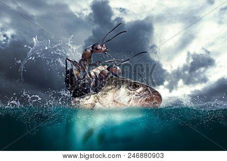 Ants seamen are fishing in the ocean