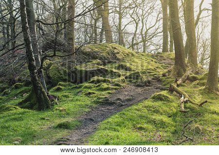 Clumps Of Moss On Stones And Trees At White Moss Walks, Scenic Forest Recreational Area In Ambleside