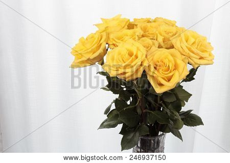 Vase Of Yellow Rose Flowers In Front Of A Curtain. Twelve Yellow Roses With Pink Streaks Vase Bouque