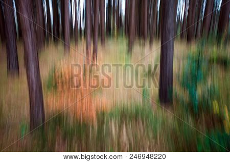 An Abstract View Of Blurred Trees In A Forest.