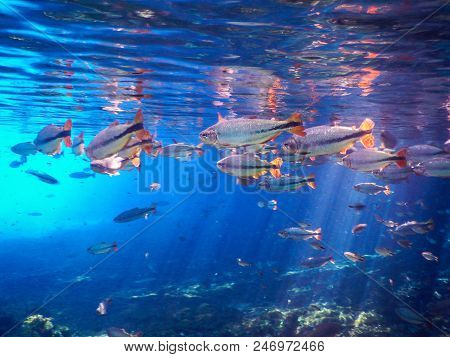 Lagoon mysterious, beautiful lagoon of transparent waters of turquoise blue, located in the city of Bonito, Mato Grosso do Sul, Brazil poster