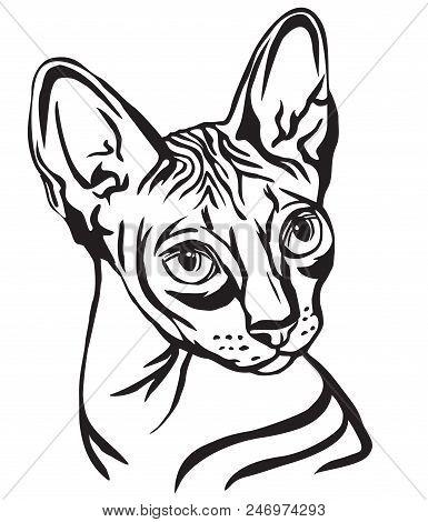 Cat 6 B