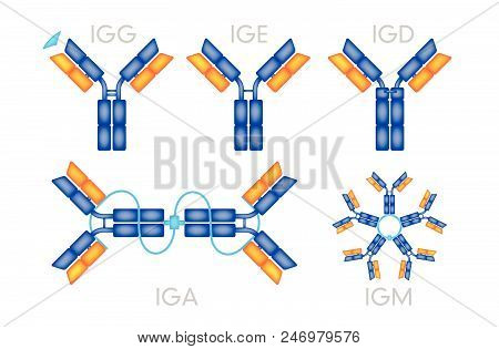 Types Of Antibodies Antigen Various Forms On White Background Vector.