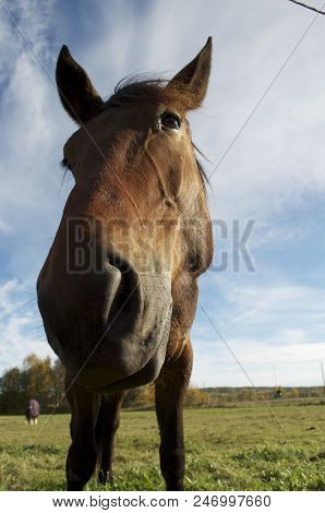 Horse On Nature. Portrait Of A Horse, Brown Horse On Sky Background