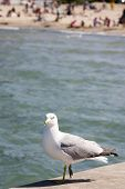 Gull standing on pier with water and beach in background poster