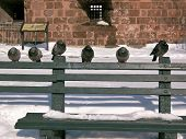 Six pigeons perch on a green bench during the winter. poster