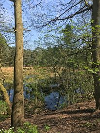 Small Lake With Tree Trunks In Foreground. Tall, Thin Trees With Rich Green Leaves In The Distance,