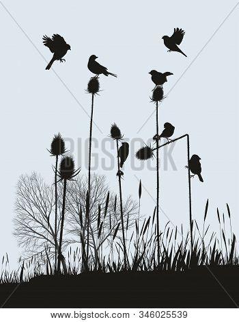 Vector Illustration Tiny Birds On A Thistle In Autumn