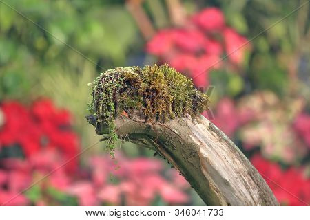 Green Moss On A Thick Dry Branch