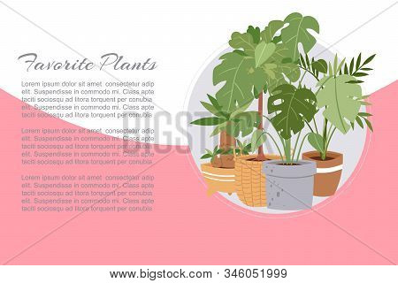 Tropical House Plants In Pots Vector Illustration. Modern And Elegant Favorite Home Herbs Planted De