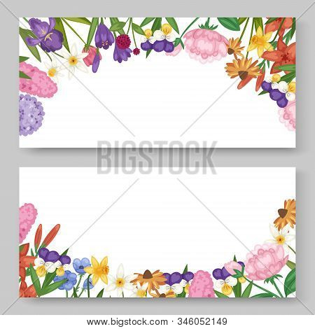 Floral Banners Set With Garden And Field Flowers Vector Ilustration. Field Or Garden Flowers, Anemon