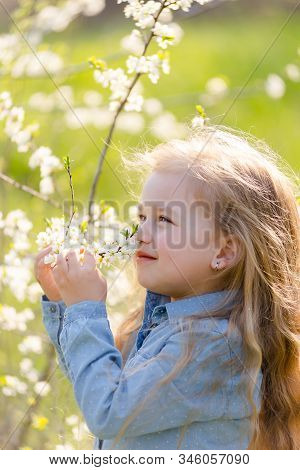 Little Cute Girl Blonde With Long Hair Sniffs A Flowering Tree Branch In The Park In Spring.