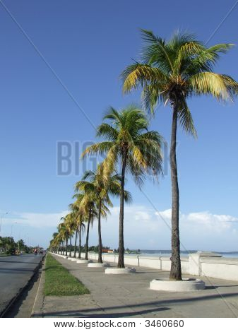 Palm Trees In A Dike