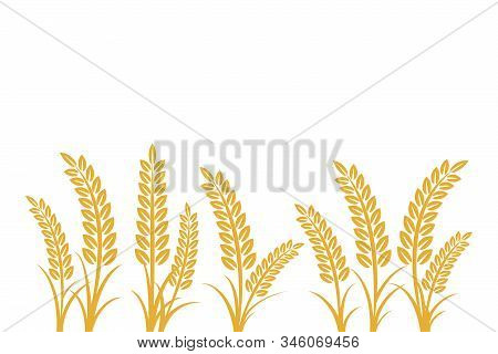 Agriculture Wheat Vector Illustration Design Template. Elements Of Wheat Grain, Wheat Ears, Seed Or