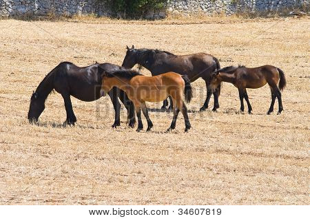 Perspective of an horses group grazing in countryside. poster