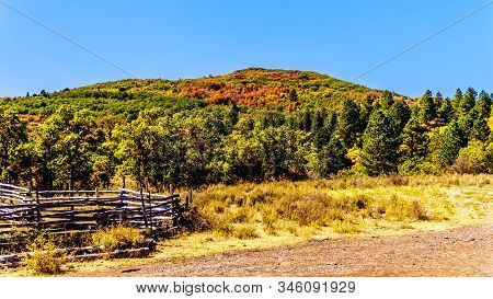 Fall Colors On The Top Of Kolob Plateau In Zion National Park, Utah, United States. Viewed From The