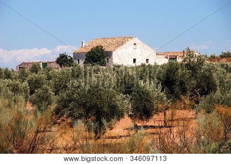 View Of Olive Groves With A Finca To The Rear, Ubeda, Andalucia, Spain.