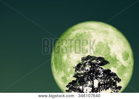 Super Full Snow Green Moon On Night Sky Back Silhouette Tree And Cloud