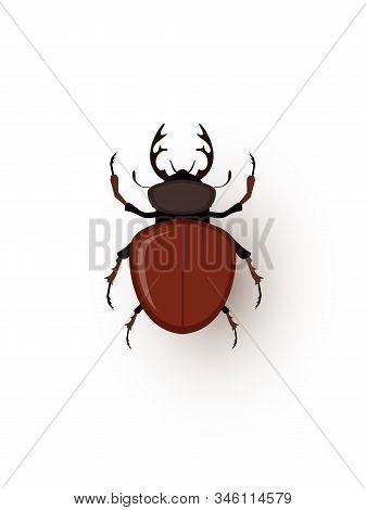 Stag Beetle, Tiny Bug Flat Vector Illustration. Lucanidae, Lucanus Cervus Closeup Top View. Small An