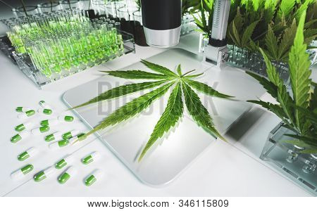 Concept Of A Cannabis In Medical Research. Fresh Marijuana Leaf On Microscope Surrounded By Test Tub