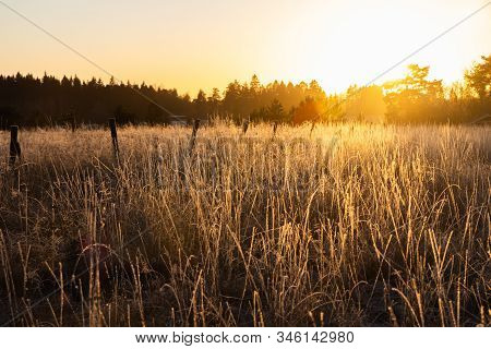 Dry Grass On Field At Sunset In Winter