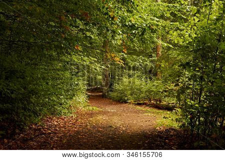 Footpath In The Autumn Forest. Sun's Rays Illuminate The Pathway In The Leaf Fall Parkland. Autumn P